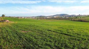 Finca agrícola y ganadera con coto de caza en el sur de Extremadura