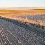 tierra de trabajo para olivar en badajoz