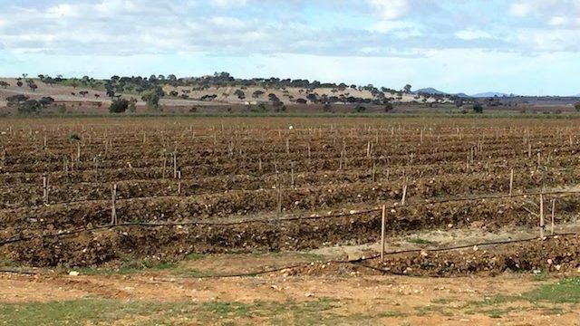 Finca de almendros con riego de canal en Extremadura