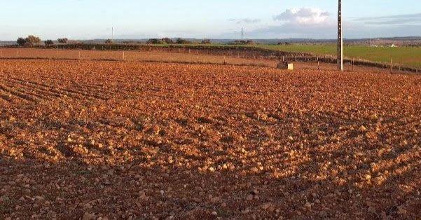 Tierra de labor para plantar olivos o viñedo