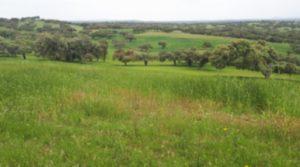 Finca rústica de 500 hectáreas de alcornocal y labor en Portugal