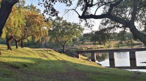 Dehesa de encinas, alcornoques y robles en el sur de Badajoz