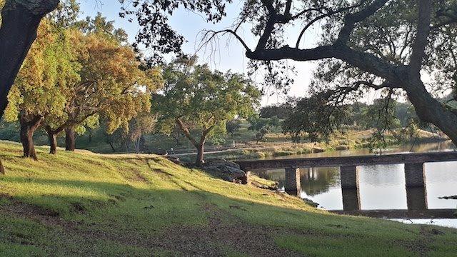 Dehesa de 205 ha de encinas, alcornoques y robles en el sur de Badajoz