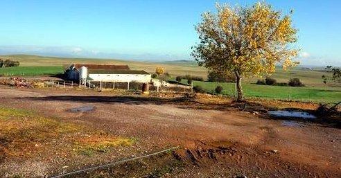 Finca rústica de 76 ha con explotación porcina de cerdas ibéricas en Extremadura