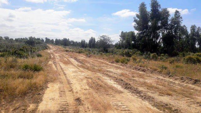 Finca de 150 ha de  eucaliptos autorizada para cambio de cultivo