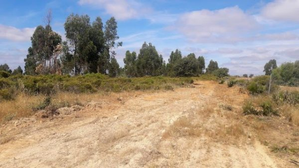 Finca de eucaliptos en la sierra de Huelva