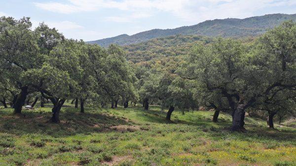 Entorno de La Umbría en la sierra de Aracena