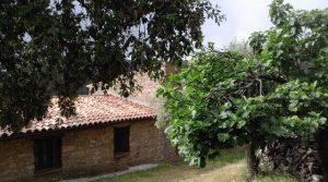 Finca pequeña con arboleda en la Sierra de San Pedro, Cáceres y Badajoz