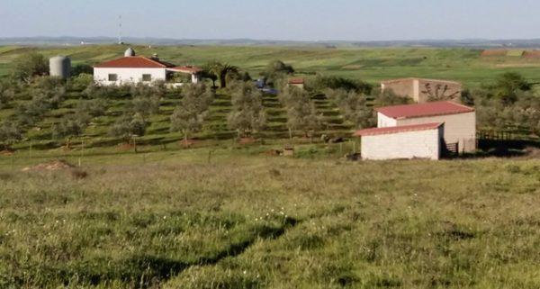 Finca de recreo en la campiña sur de Extremadura