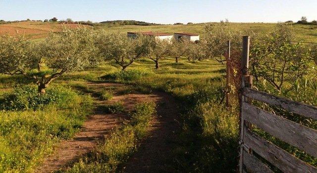 Finca de olivos con casa