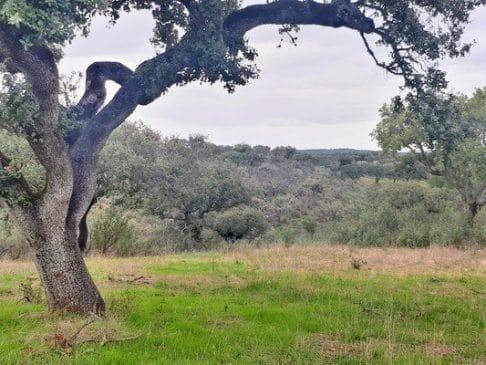 Dehesa de encinas y alcornoques con buena tierra en Portugal