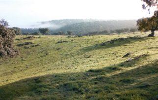 Finca vaquera y de cochinos en venta en Extremadura