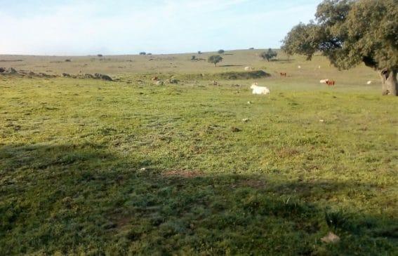 Dehesa de 210 hectáreas junto a carretera en Cáceres