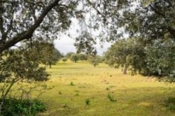 Finca dehesa de 33 ha en Extremadura para Hotel Rural o lugar de convenciones