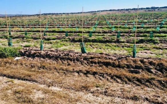 Finca de 230 ha de olivos superintensivos con riego de Alqueva en el sur de Portugal