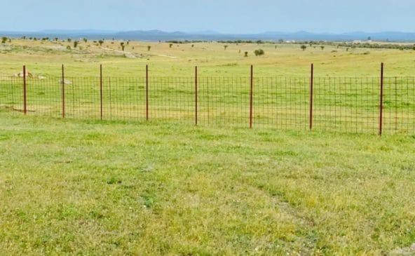 Zona de pradera sin árboles