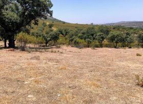 Arbolado de encinas con monte de jaras en Extremadura