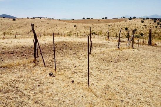 finca de labor para plantar olivos