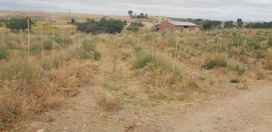 Finca de 6 hectáreas de olivar superintensivo con hidrante de canal