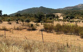 Terreno con reforestación