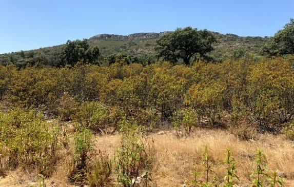 Finca dehesa de 150 hectáreas en el Parque Nacional de Monfragüe