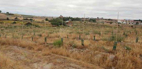 terreno-olivos