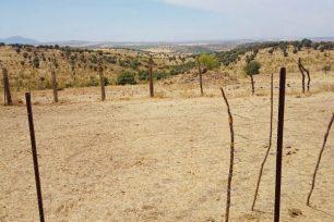 Terreno de pastos para ovejas