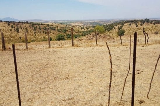 Terreno de pastos