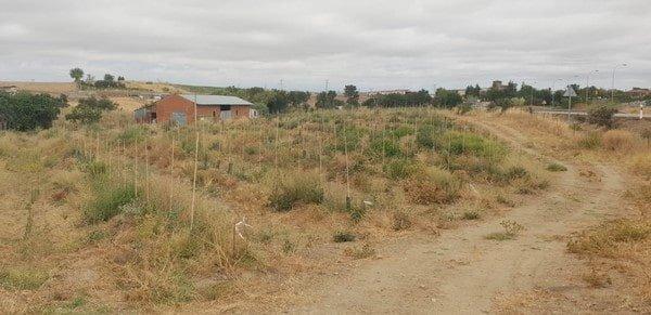 Buena tierra de olivar