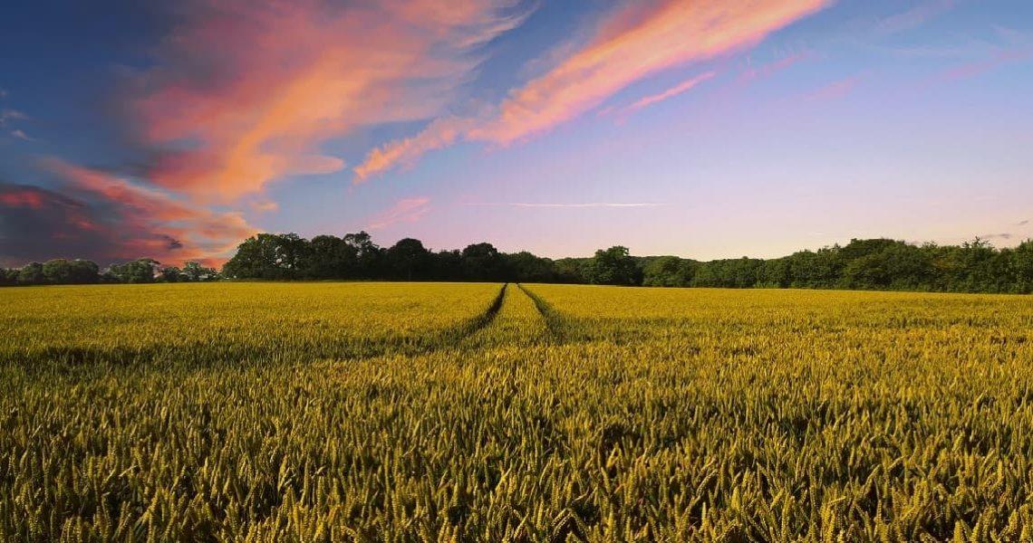 fincas-agricolas