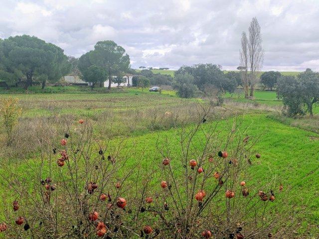 Terreno de cultivo con casa al fondo