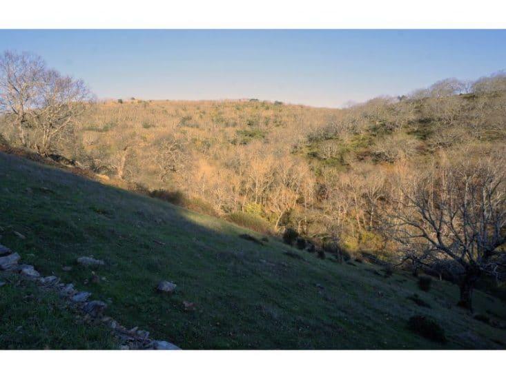 Imagen del paisaje de castaños y robles de la sierra de Aracena