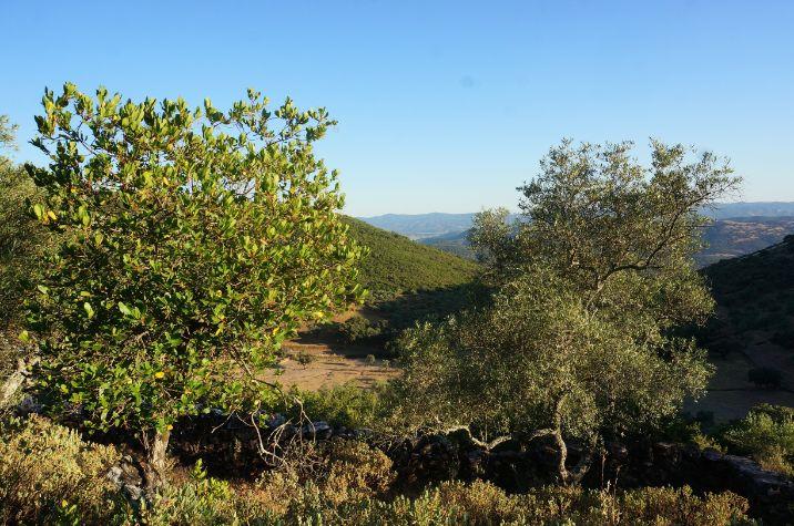 Finca con higueras en Arroyomolinos de León
