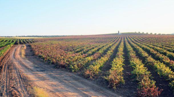 Bodega de vino con marca propia en Badajoz