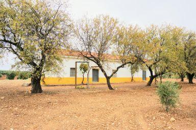 Terreno de olivos de 5,8 ha con cortijo habitable