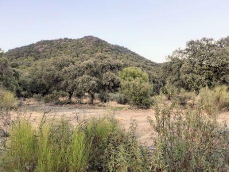 Finca mixta de 125 ha caza y ganadera en Cáceres