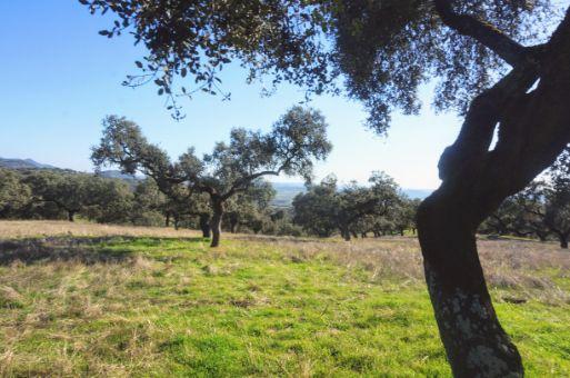 Finca mixta en la sierra de Aracena, 270 ha