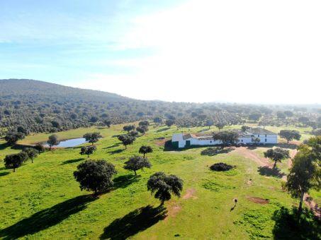 Reforestación superior a 20 años
