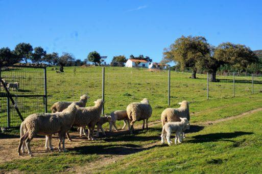 Finca de 15 ha con casa en la sierra de San Pedro, Extremadura