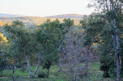 Diversidad de árboles como alcornoques, encinas y madroños