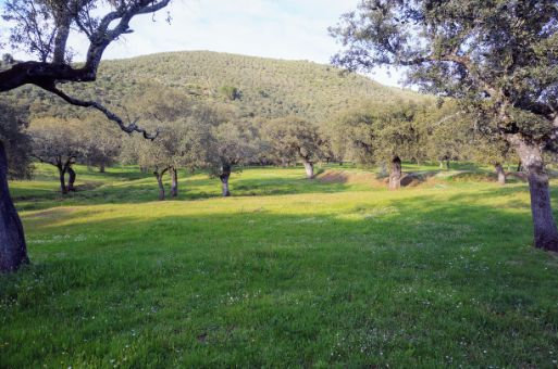 Sierra de olivos en la comarca de Tentudía