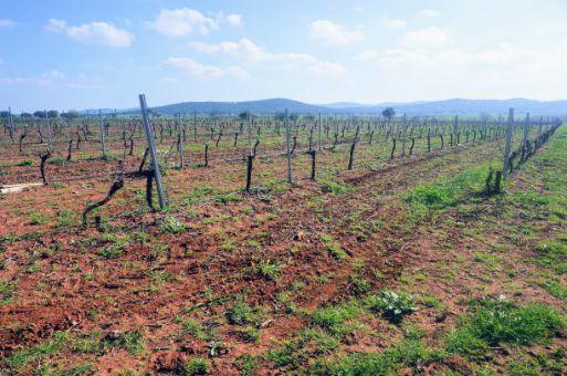 Terreno de viñas en espaldera, 17 ha