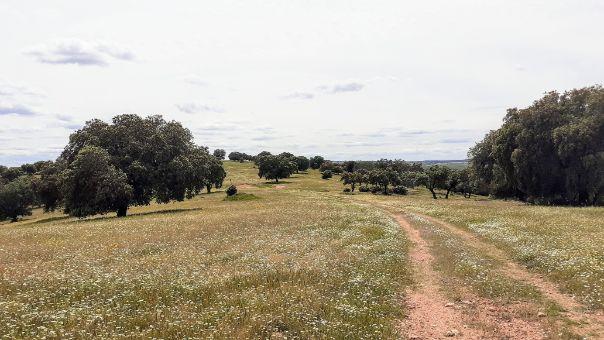 terreno de buenos pastos